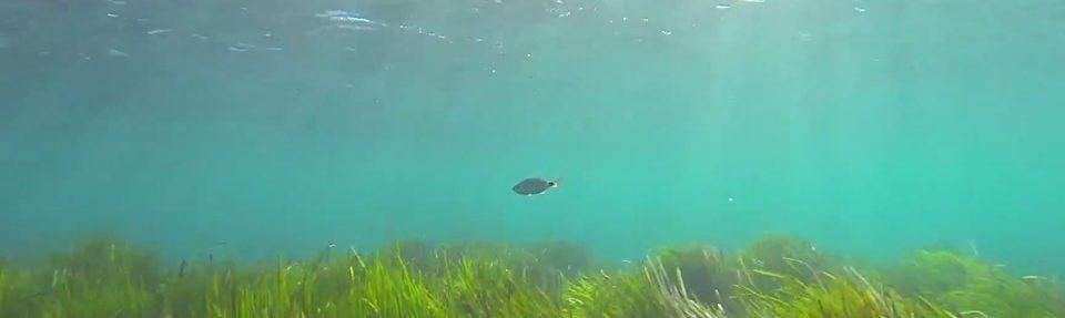 Sicilia Underwater